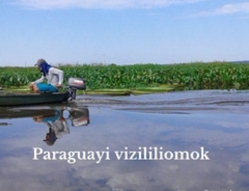 Kutatás az óriás vizililiomok után Paraguayban